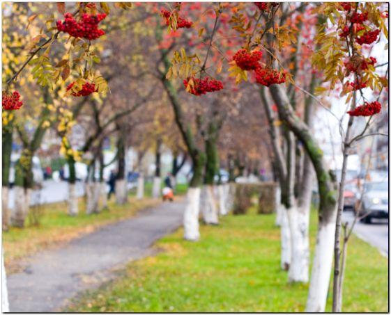 Диета осень